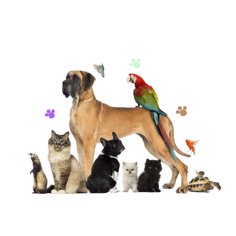 Petsoholic - How to choose your first pet