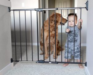 New Dog - safety gate