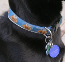 New Dog - Dog ID Tag
