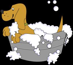 New Dog - Dogs grooming - petsoholic