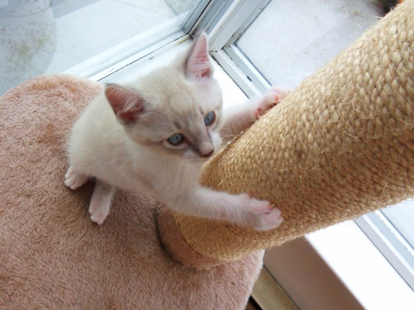 cat scracther - Petsoholic
