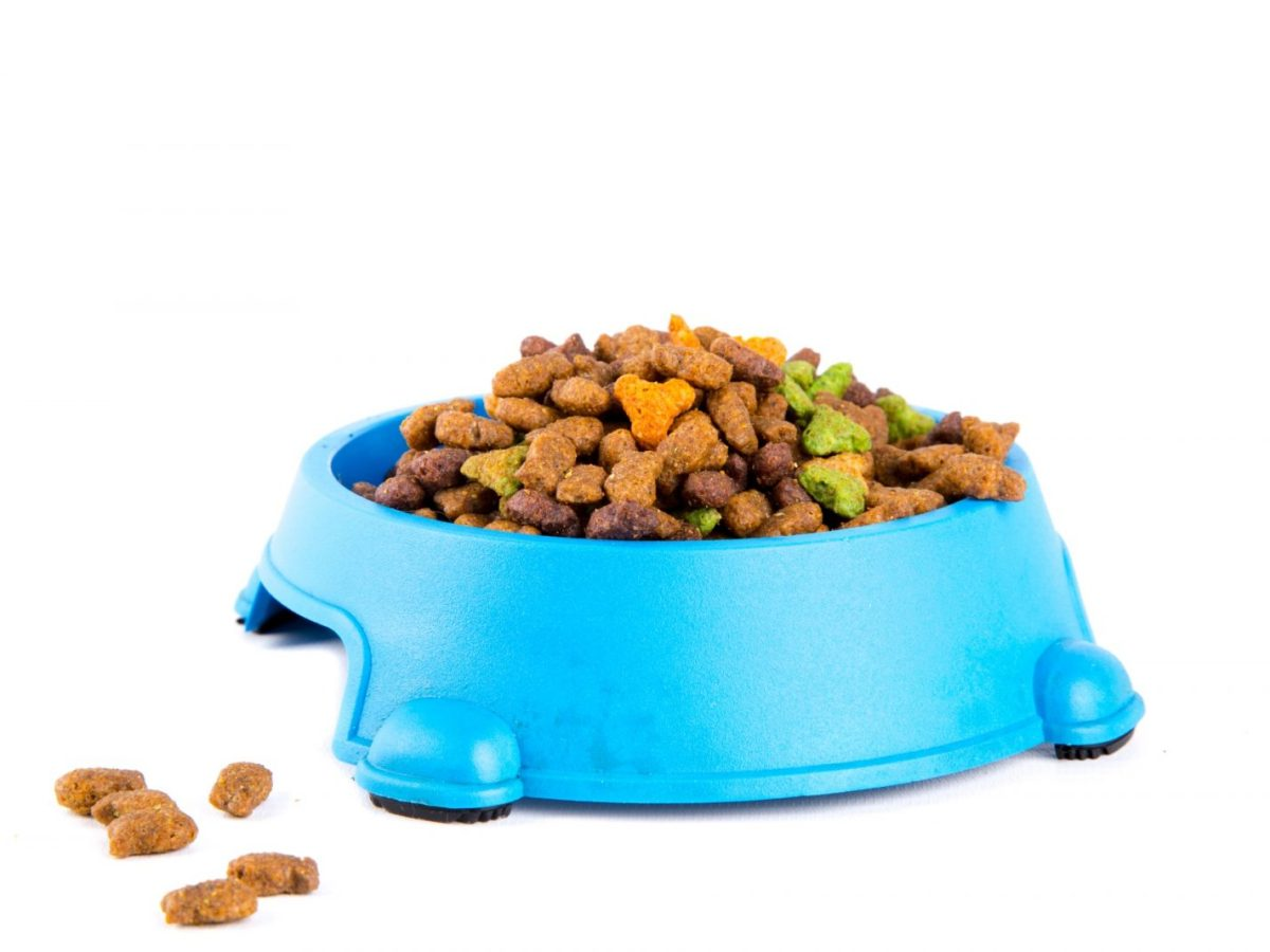 Cats dry food
