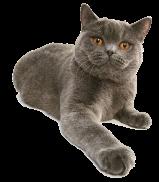 قطة جديدة - Cat - Petsoholic