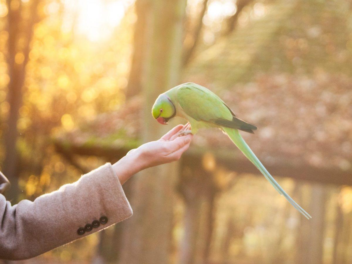Bird first day home_Petsoholic