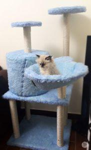 قطة جديدة - Hugzy - Scratch house - Petsoholic